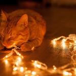 Eine Katze liegt auf dem Boden und spielt mit einer leuchtenden Lichterkette.