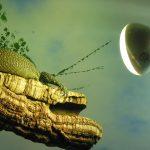 Reptil sonnt sich in Terrarium unter Reflektorlampe