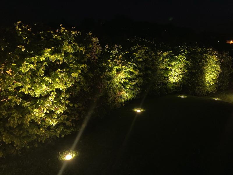 Eine Hecke wird von Paulmann Plug & Shine Leuchten bestrahlt.