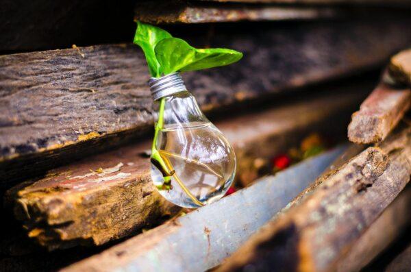 Eine Glühlampe mit Wasser und einer Pflanze lehnt an einem Stapel Holz.