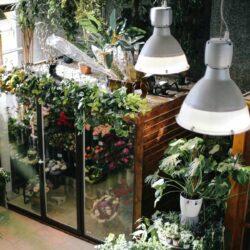 Ein mit Ablegern gefülltes Pflanzen-Anzuchthaus, in und über dem geeignete Leuchten tageslichtweißes Licht abgeben.