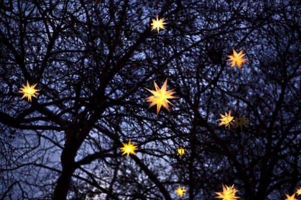 In einem großen Baum leuchten viele gelbe Herrnhuter Sterne